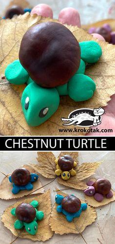 CHESTNUT TURTLE