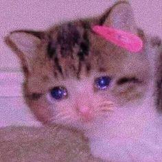 Meme Faces, Funny Faces, Cute Memes, Dankest Memes, Memes Lindos, Anime Couples Drawings, Sad Cat, Aesthetic Memes, Cartoon Memes