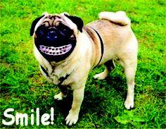 58 Best Smile Images In 2012 Orthodontics Teeth