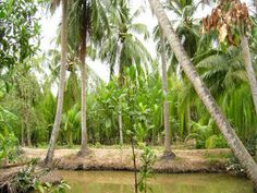 Mekong river Homestay in Can Tho ~ Mekong Delta Cruises