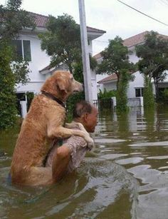 Such a heart-touching photo ♥ like & share ♥ Dogs World