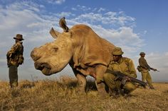 2012 World Press Photo Winners   RHINO WARS: Nature, 1st prize stories, Brent Stirton. A four man anti-poaching team permanently guards a Northern White Rhino on Ol Pejeta Conservancy in Kenya. July 13th, 2011.