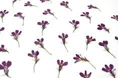 Lobelia Flowers, Dried Flowers, Resin Molds, Ranunculus, Candle Making, Soap Making, Wedding Decorations, Scrapbooking, Garden