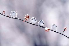 I love these cute and tiny creatures. The birds are really beautiful. I think the birds define the nature. When I see the birds especially in winter I feel excited and happiness because both the bi… Cute Birds, Pretty Birds, Beautiful Birds, Animals Beautiful, Beautiful Things, Animals And Pets, Baby Animals, Cute Animals, Wild Animals