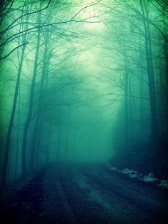 The true Dark Forest