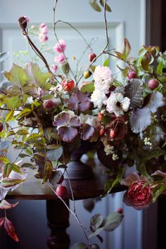 You Need to Know: Saipua Most Beautiful Flowers, Pretty Flowers, Early Spring Flowers, Columbine Flower, Heirloom Roses, Cut Flowers, Flower Designs, Floral Arrangements, Flower Arrangement