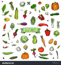 Hand drawn doodle vegetables icons set Vector illustration seasonal vegetable symbols collection Cartoon different kinds of vegetables Various types of vegetables on white background Sketchy style-食品及饮料,物体-海洛创意(HelloRF)-Shutterstock中国独家合作伙伴-正版素材在线交易平台-站酷旗下品牌