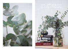 Nuestro nuevo #eucalipto #deblancfotografia #deblancstudio #fotografosvalencia