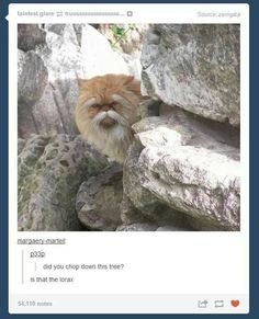 OMG IM CRYING FIND ME THIS LORAX CAT THING
