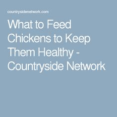 What to Feed Chickens to Keep Them Healthy - Countryside Network