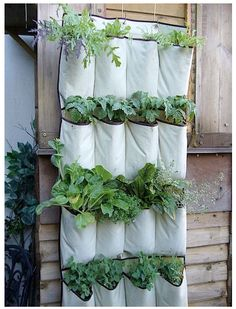 """Shoe organizer garden """"small space"""" via apartment therapy. Not just for shoes anymore. Great for a quick garden on a small patio space."""