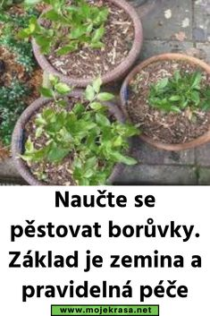 Growing Plants, Indoor Plants, Pesto, Garden, Balcony, Inside Plants, Garten, Lawn And Garden, Gardens