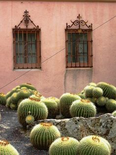 Peace + Beauty: Lotusland in Montecito, outside #SantaBarbara, CA
