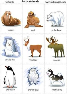 Arctic Animals printable poster and/or game cards