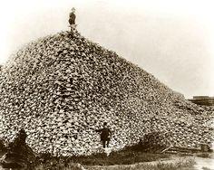 bison-massacres.jpg 576×461 pixels