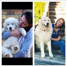 I have my own Oddball #dog #puppy #polar #love #him #movie #oddball #goofy #maremma by maddyasd187