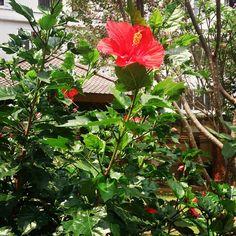 #flowerstyles_gf #flowerlovers #flowers #floweroftheday #flowerstagram #flower #4gardentips #gardeningtips #garderner #instagardeners #instagarderner #lilgarden #instamood #garden #gardening #gardens by dsastropadi.zh