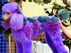 Probably my future dog #yene