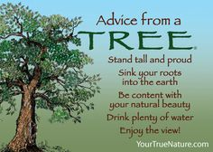 Advice from a Tree Magnet Large