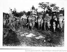 Le Tableau d'une matinée de chasse : 4 tigres et une gazelle : [photographie de presse] / [Agence Rol] - 1