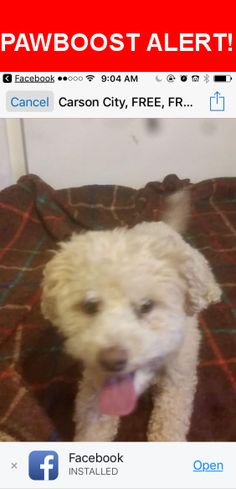 Is this your lost pet? Found in Carson City, NV 89703. Please spread the word so we can find the owner!  White medium size   Near N Mountain St & Adaline St