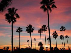 Long Beach, California Sunset Millennials, This specific Ca. California Palm Trees, Palm Tree Sunset, Palm Trees Beach, Long Beach California, Sunset Beach, California Camping, Beach Sunsets, California Style, Laguna Beach
