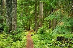 The McKenzie River Trail