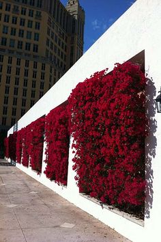 Once you've designed your garden, pick the plants that you want to grow during each season. There's no better solution than to bring a vertical garden. While arranging a vertical garden… Landscape Architecture, Landscape Design, Garden Design, Fence Design, Vertical Garden Wall, Vertical Gardens, Fence Garden, Fence Plants, Farm Fence