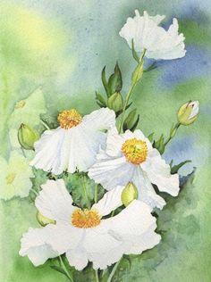 White Tree Poppy - watercolour by Julie Horner - SOLD