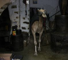 Power cuts and other Sanaa stories Places To Visit, Horses, Reading, Word Reading, Horse, Reading Books, Libros