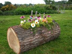log planter plus carve name in the front Tree Stump Planter, Log Planter, Wood Planters, Flower Planters, Garden Planters, Outdoor Plants, Outdoor Gardens, Garden In The Woods, Wooden Garden