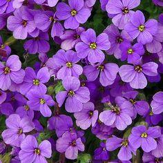 purple - Поиск в Google