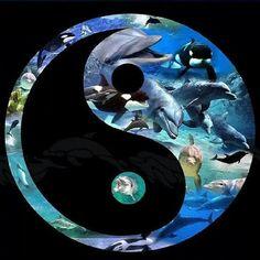 Speichern Sie die Ozeane! - Gemeinschaft - Google+
