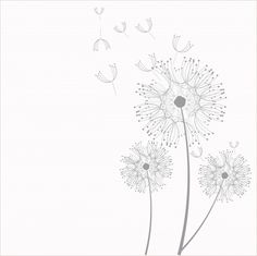 Dandelion Flowers Clipart Free Stock Photo - Public Domain Pictures