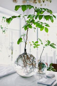 RAJU Design blog: 2015 Getting 'The Green' Inside - What's On Trend Now