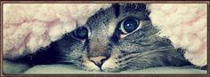 Kitten ~ FB Cover