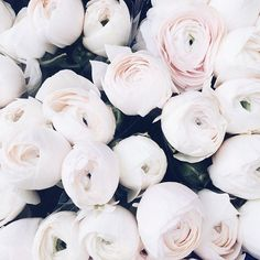 @Missgalaxy3699 • Sarah Jones - Xoxo Babes