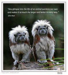 John Muir - Animal rights, Animal welfare.