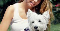 Como manter seu Westie branco. O West Highland White Terrier ou Westie possui um admirável pelo branco que pode ser um desafio para manter limpo. O cão tem um revestimento de camada dupla. Sua camada exterior é grossa para protegê-lo de dentes e garras durante a caça, enquanto a inferior é macia para fornecer isolamento e calor. Compreender o pelo do Westie e tomar medidas para ...