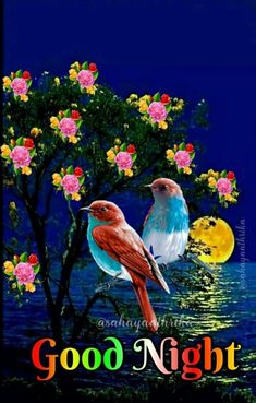 Good Night Flowers, Good Morning Images Flowers, Good Morning Picture, Good Night Image, Morning Pictures, Good Night My Friend, Good Night Love Quotes, Good Evening Wishes, Good Night Wishes