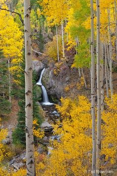 Nellie Creek Waterfall by Tad Bowman This photograph depicts Nellie Creek Falls in the Colorado Mountains with brilliant fall colors. Belle Image Nature, Beautiful World, Beautiful Places, Les Cascades, Mellow Yellow, Color Yellow, Yellow Black, Beautiful Landscapes, The Great Outdoors