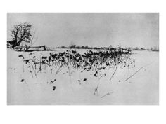 """Peter Henry Emerson """"Marsh Leaves - The snow garden"""" 1895 History Of Photography, Artistic Photography, Vintage Photography, Photography 2017, White Photography, The Snow, Land Art, James Mcneill Whistler, London Photos"""