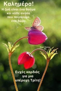 Mother Earth, Mother Nature, Greek Quotes, Beautiful Butterflies, Botanical Illustration, Happy Day, Good Morning, Nature Photography, Beautiful Pictures