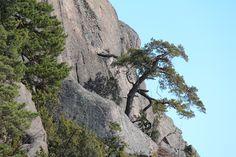 Kalvi Birches, Summer Photos, Archipelago, Seas, Finland, Mount Rushmore, Mountains, Photo And Video, Videos