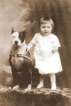 "Old photos of the ""Nanny Dog"" - Staffordshire Bull Terrier 