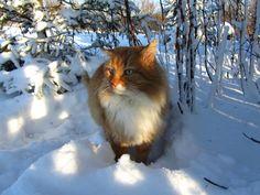 Kot, Zima