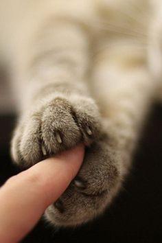 Educar gato e compreendê-la - 40 fotos de gatos fofos - katze - I Love Cats, Cute Cats, Funny Cats, Crazy Cat Lady, Crazy Cats, Portrait Studio, Cat Emoji, Cat Playground, Cat Photography