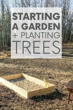 Always dreamed of starting a garden? Me too! Which is why it was the first project we tackled after moving into our sustainable home. Check it out! #startingagarden #plantingtrees #sustainableliving Sustainable Design, Sustainable Living, Garden Beds, Home And Garden, Building Raised Beds, Starting A Garden, In The Tree, Planting Seeds, Trees To Plant