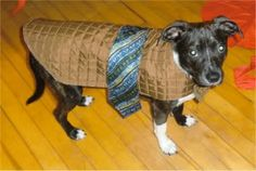 dog coat - like the tie belt thing