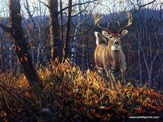 "In the Bruce Miller print BACKWOODS RUNNER a large whitetail buck deer runs for cover through the autumn leaves that have fallen on the forest floor. ""Is there a predator behind him? A doe in front? Wildlife Paintings, Wildlife Art, Deer Paintings, Whitetail Deer Pictures, Deer Pics, Deer Photos, Turkey Hunting Season, Hunting Art, Moose Hunting"